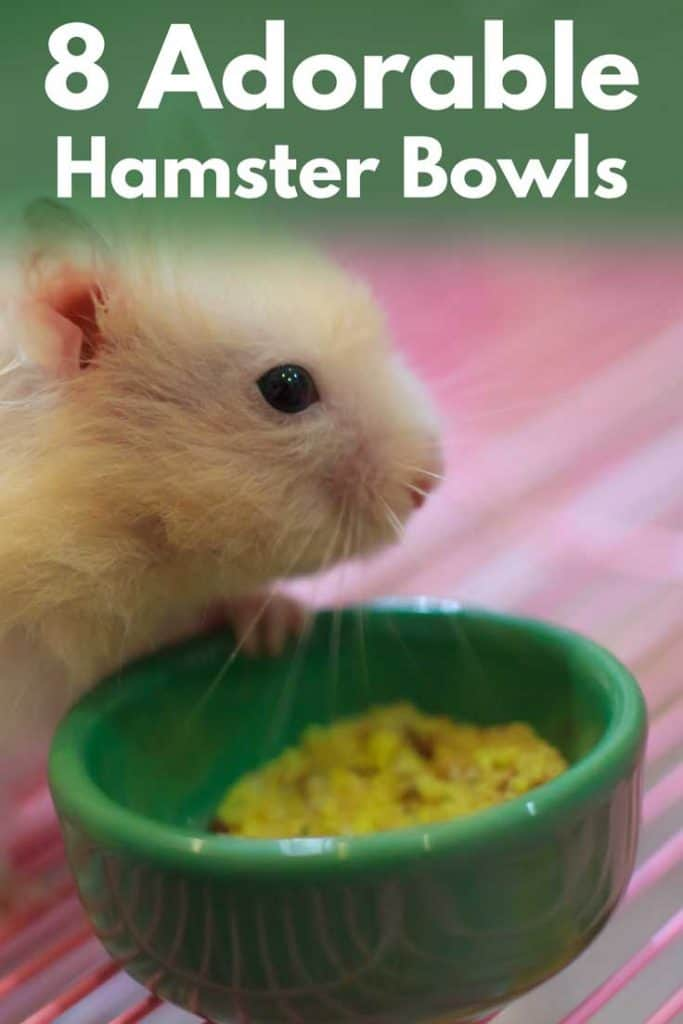 8 Adorable Hamster Bowls That Will Make Both Your Hamster and You Happy
