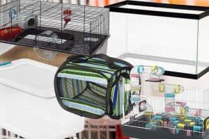 5 Types of Hamster Cages Every Pet Owner Needs To Know
