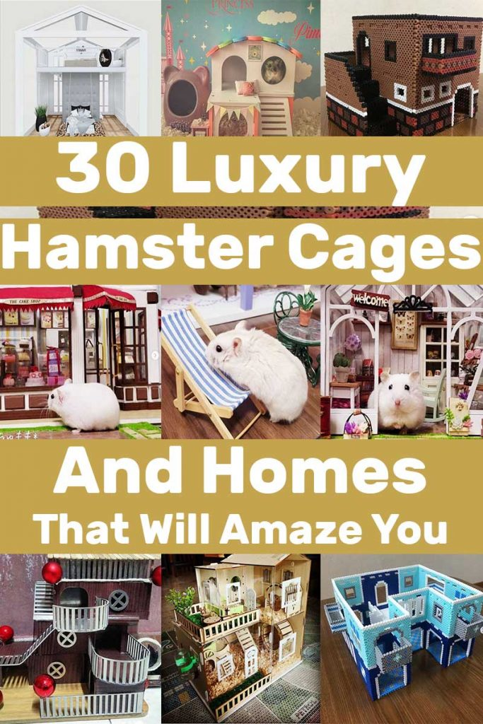 then we recommend you check out these 30 luxury hamster cages and homes