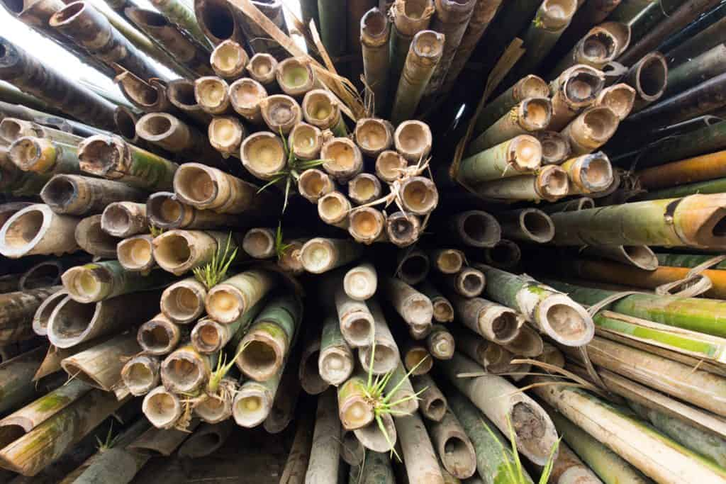 A top view of tall bamboo trees