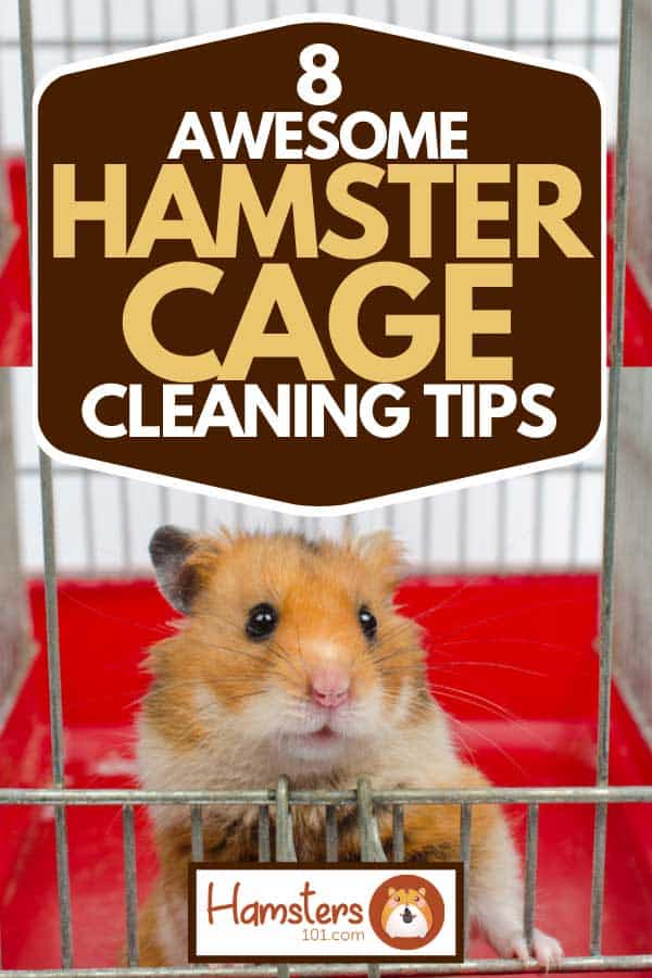 Funny Syrian hamster looking out of the cage, 8 Awesome Hamster Cage Cleaning Tips