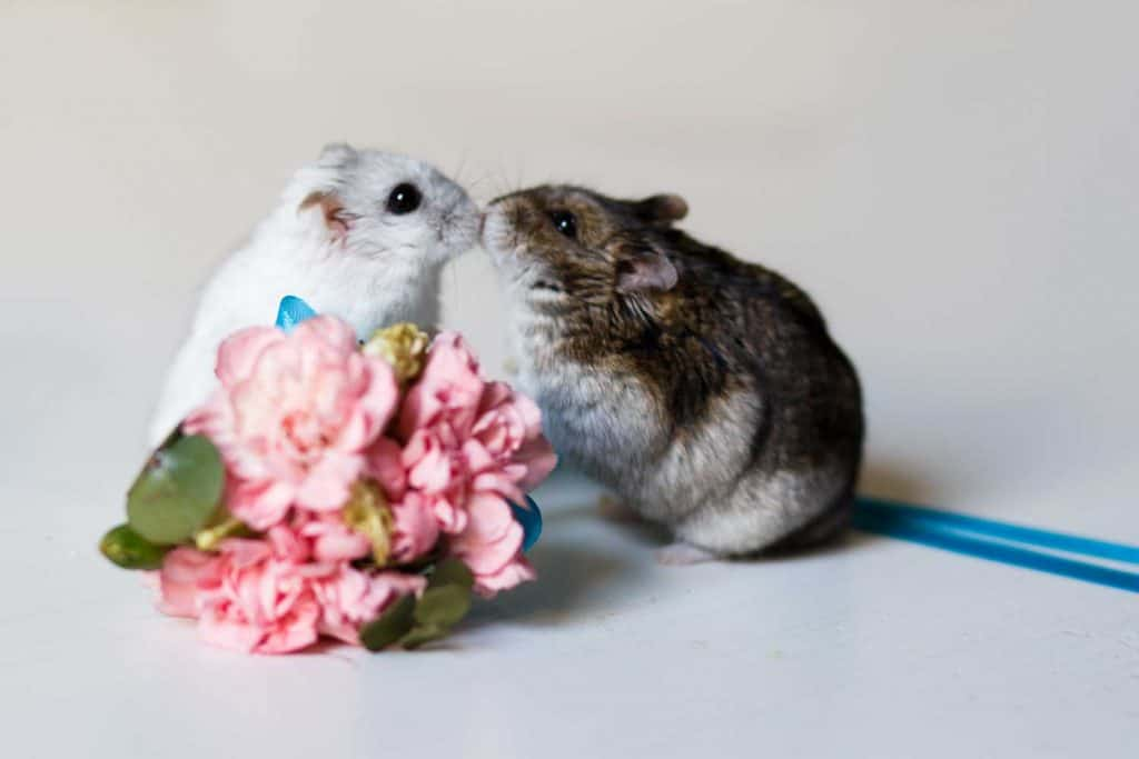 Close up photo of two little hamsters near flowers