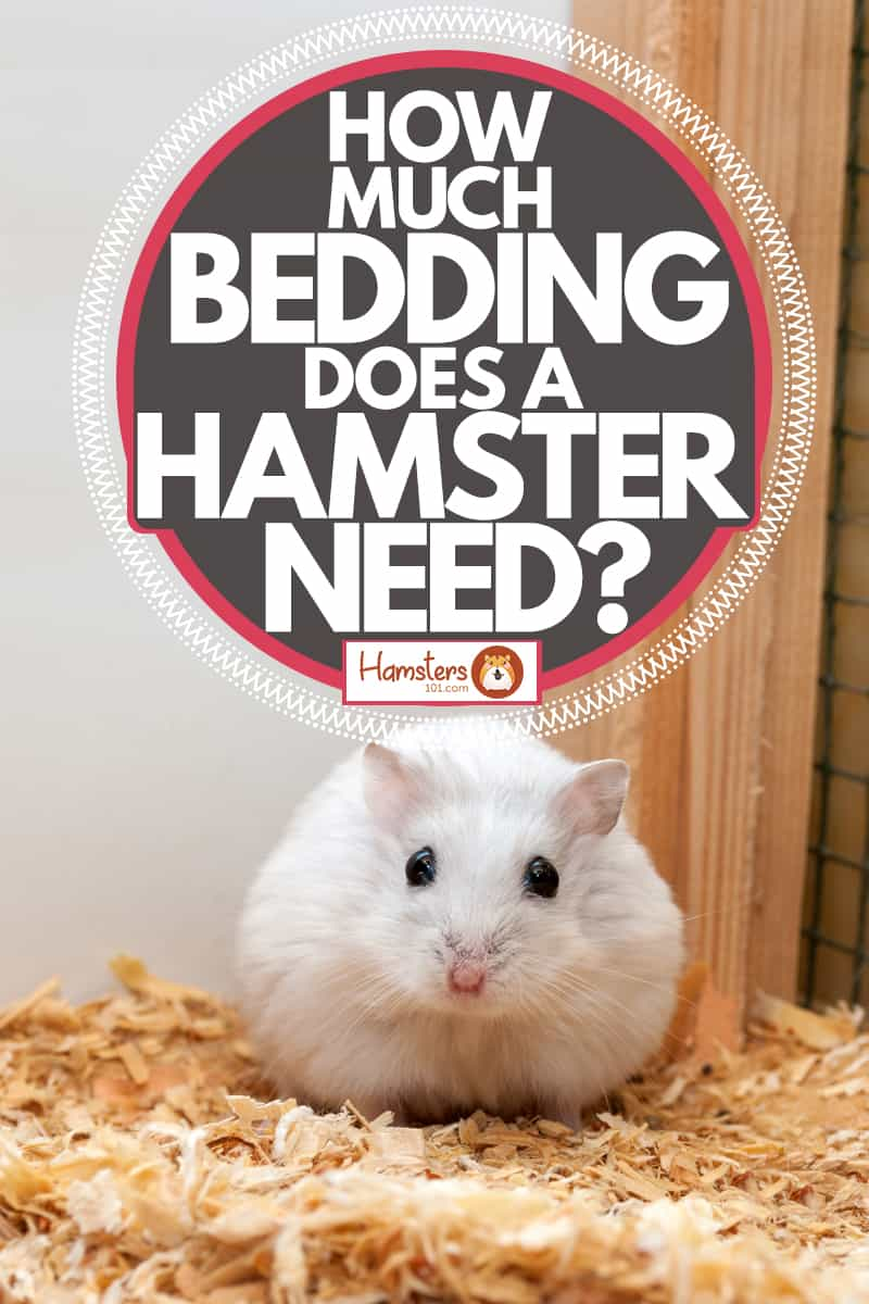 A small hamster sitting on shredded wood on his cage, How Much Bedding Does A Hamster Need?