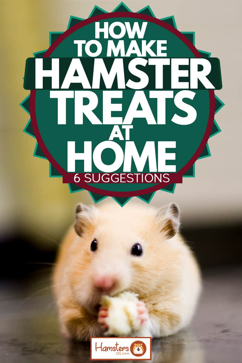 A cute golden hamster eating a piece of treat on its hamster cage, How To Make Hamster Treats At Home [6 Suggestions]