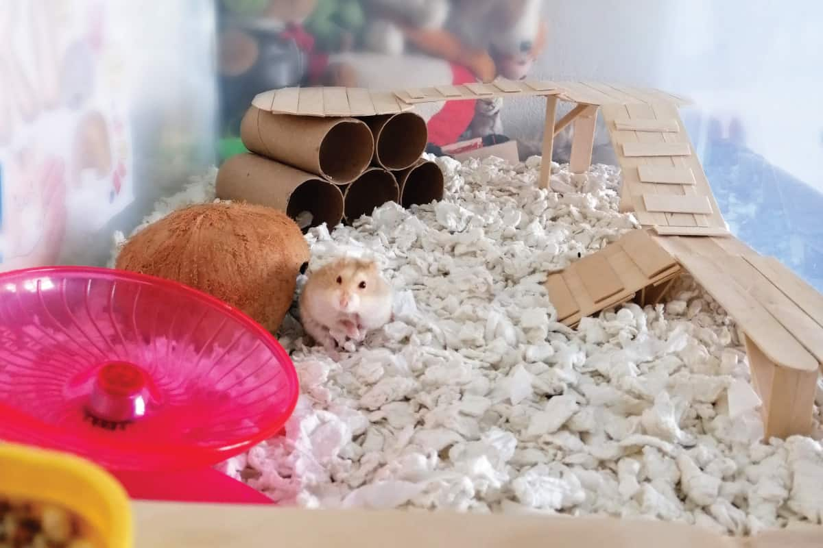hamster in its playground