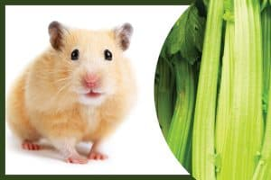 hamster with celery, Can Hamsters Eat Celery (Including Stalks)?