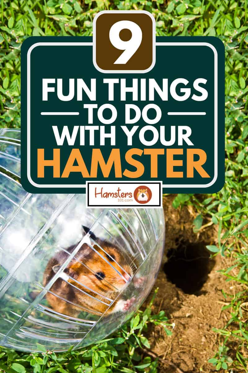 A cute hamster inside a hamster ball, 9 Fun Things To Do With Your Hamster