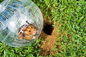 9 Fun Things To Do With Your Hamster