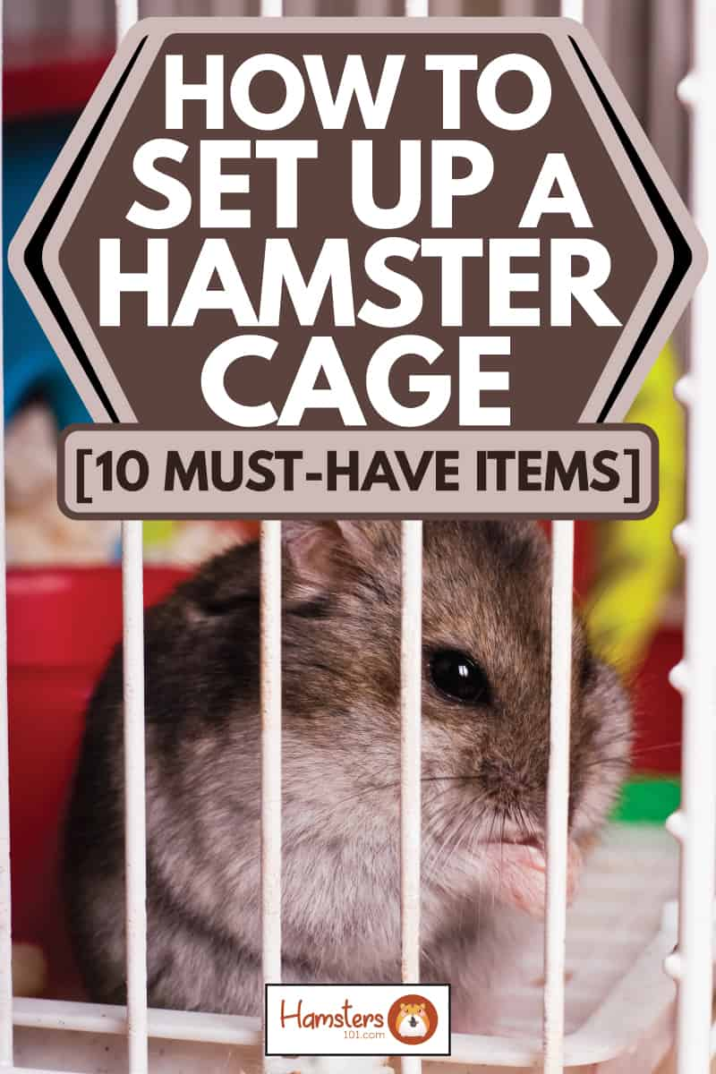 brown hamster in cage nibbling on to sunflower seeds, how to set up a hamster cage p10 must have items]