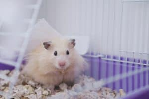 How to Set up a Hamster Cage [10 Must-Have Items]