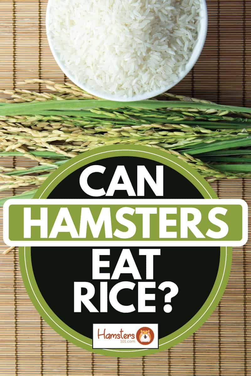 Uncooked rice in a white bowl and rice bran in a brown mat, Can Hamsters Eat Rice?
