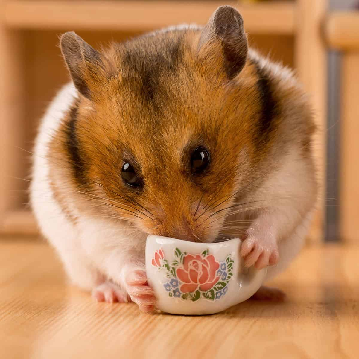 A cute hamster drinking coffee on a small mug