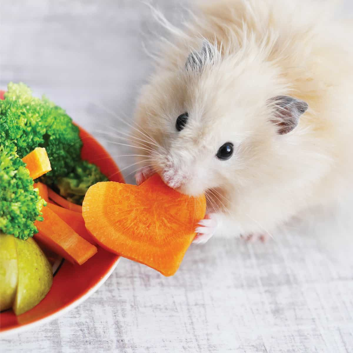 A fluffy hamster eats vegetables and fruits from an orange plate