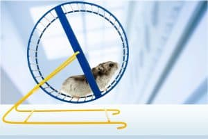 Hamster running on his blue running wheel, What Size Wheel Does a Hamster Need?