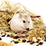 Can Hamsters Eat Spider Plants?