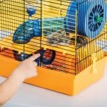 How Much Does A Hamster Cage Cost?