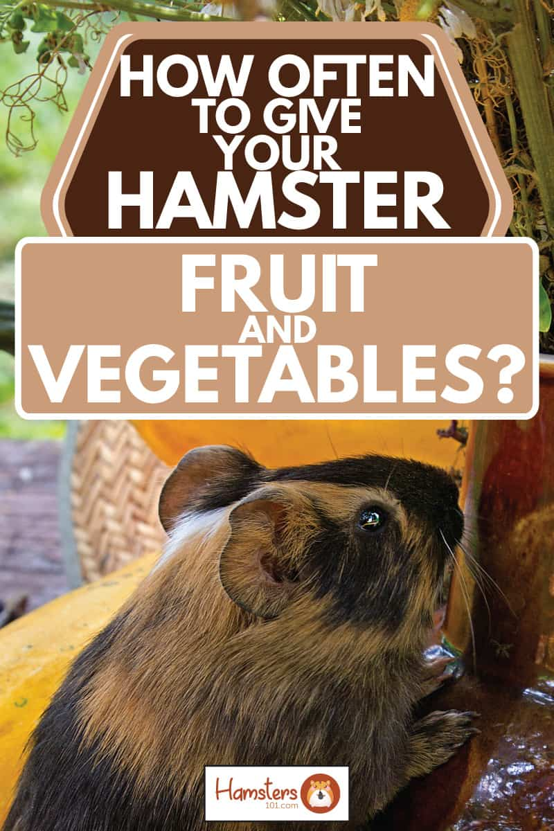 Hamster eating fruits and vegetables on a table with a vase, How Often To Give Your Hamster Fruit And Vegetables?
