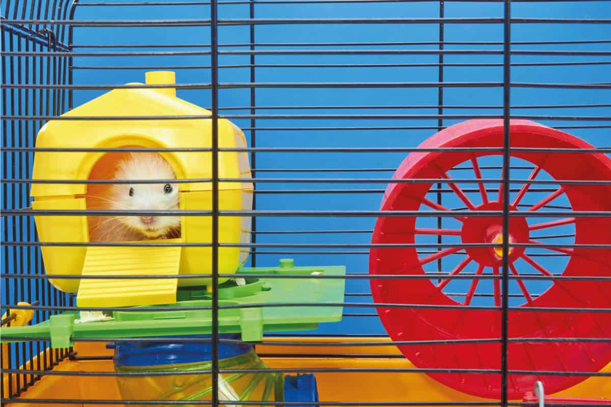 Hamster inside a yellow house in a cage looking out
