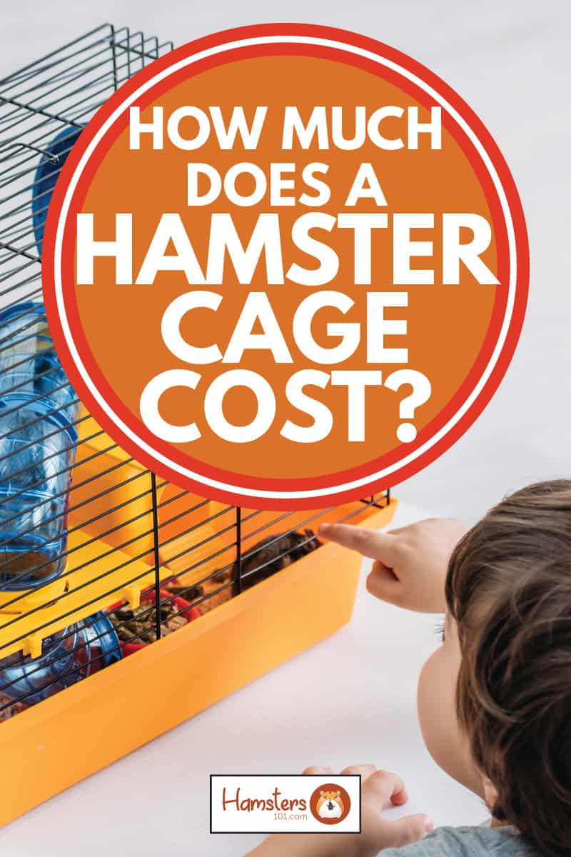 Young boy poking a yellow hamster cage with a hamster house inside, How Much Does A Hamster Cage Cost?