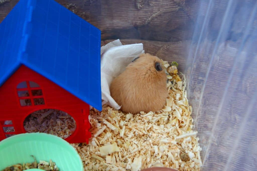 A cute little hamster huddled on the side his cage