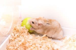 Read more about the article Hamster's Coat Looks Ruffled – What To Do?