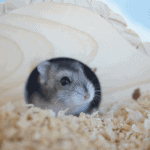 Can Hamsters Eat Wood?