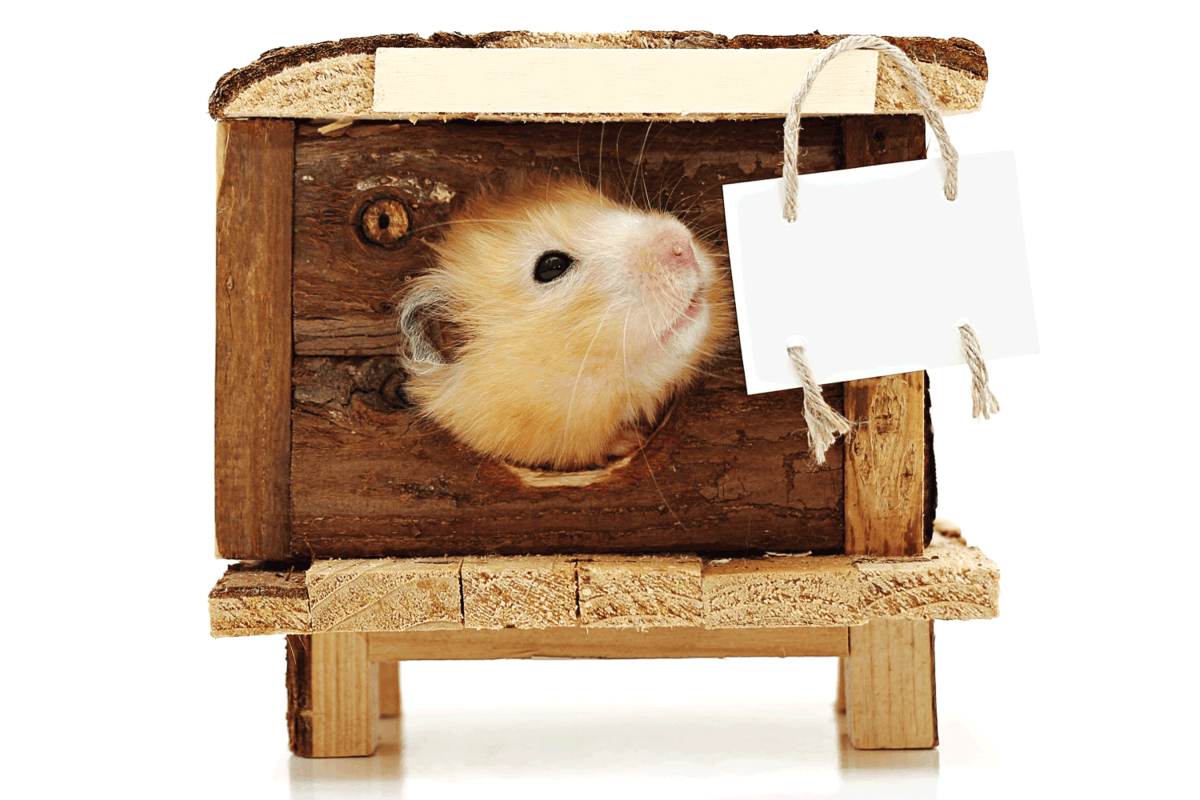 Hamster looks out the window of the house. At home hangs a plaque for ads. Isolated on white background.