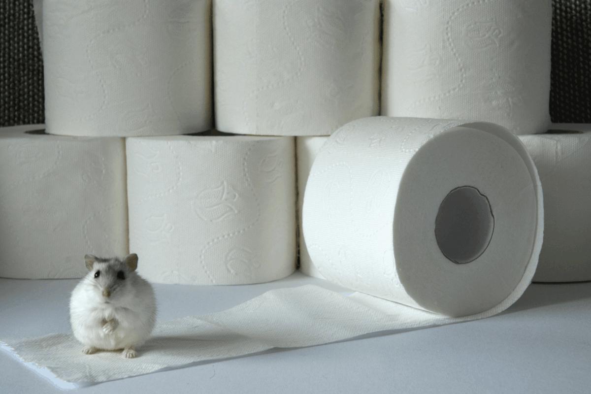 Hoarding like a hamster in toilet paper during quarantine for Corona. little hamster sitting on toilet paper