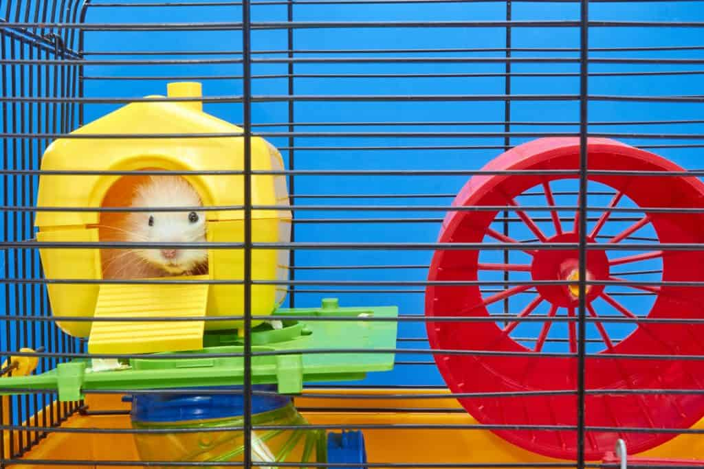 A cute hamster lying inside his small yellow house inside his cage