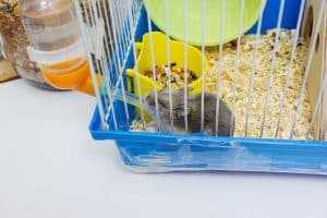 Read more about the article Can You Keep A Hamster Cage On The Floor?