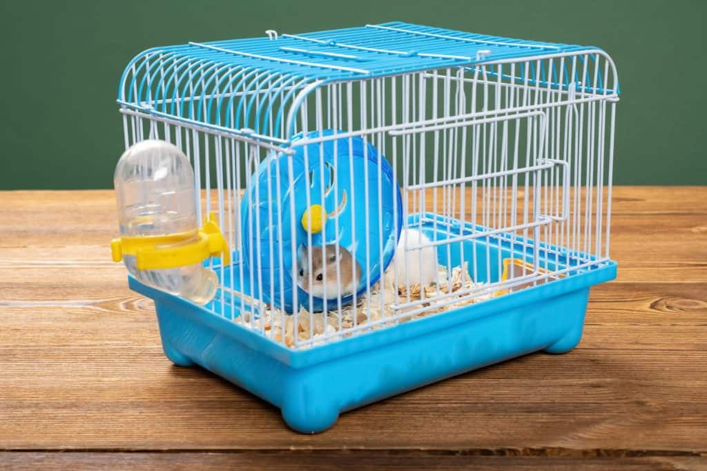 A small hamster playing in his plastic wheel inside his cage