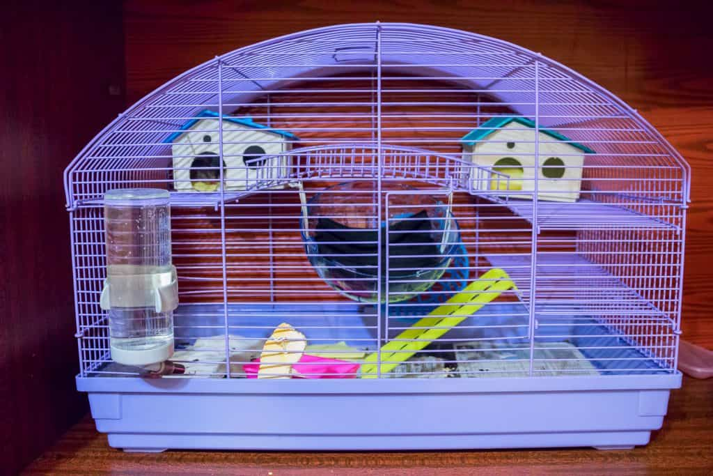 A small violet colored hamster cage on the floor