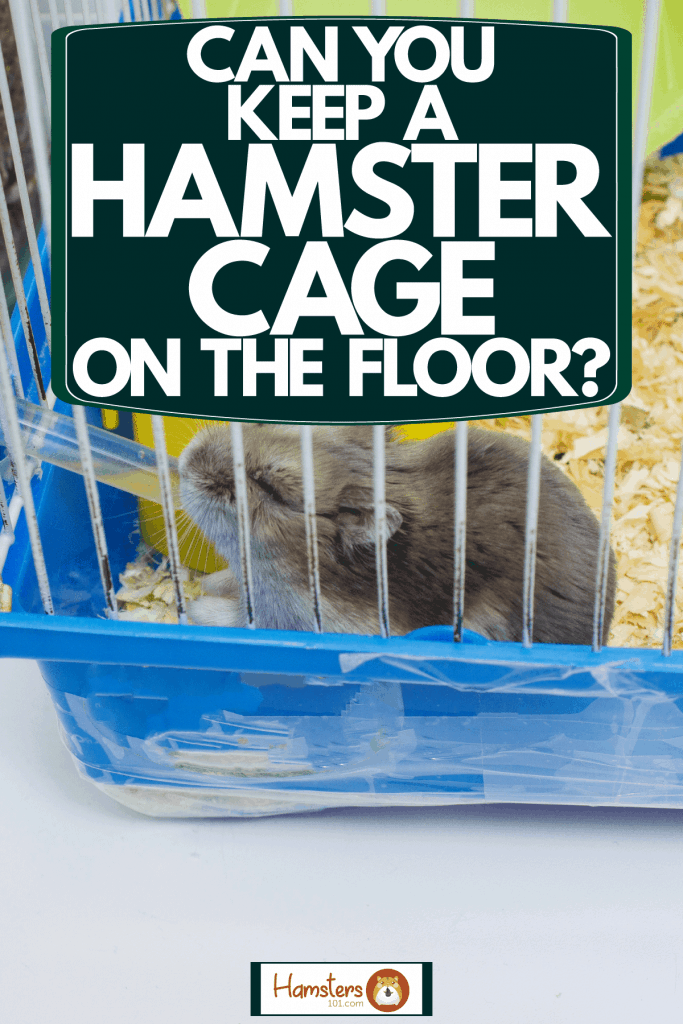 A small cute hamster drinking his water inside his cage, Can You Keep A Hamster Cage On The Floor?