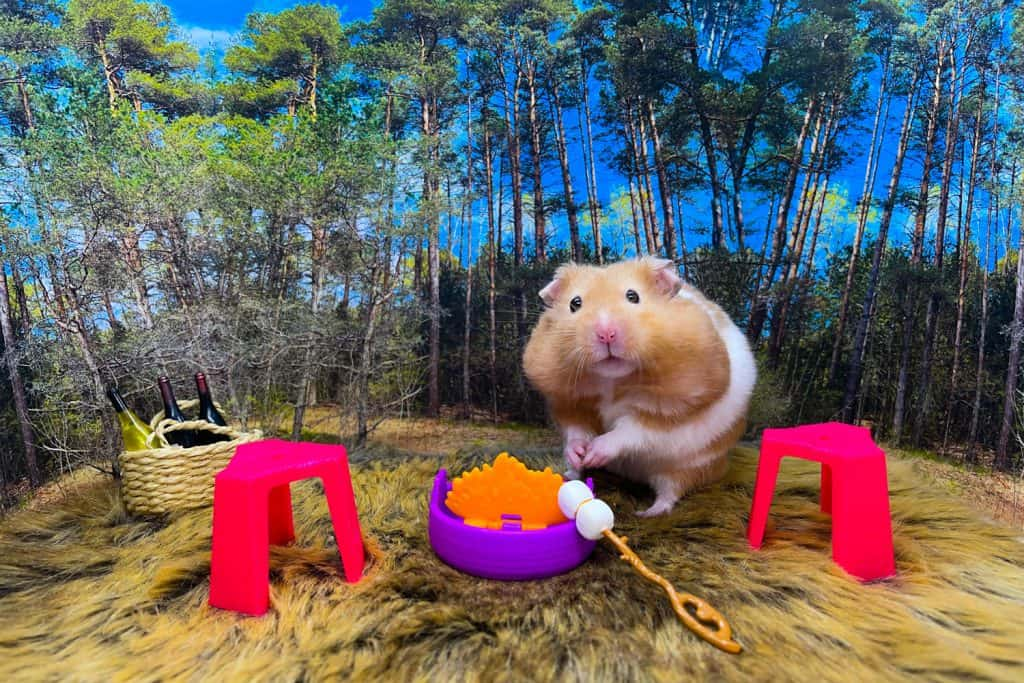A hamster eating in his small carrot in a small violet table
