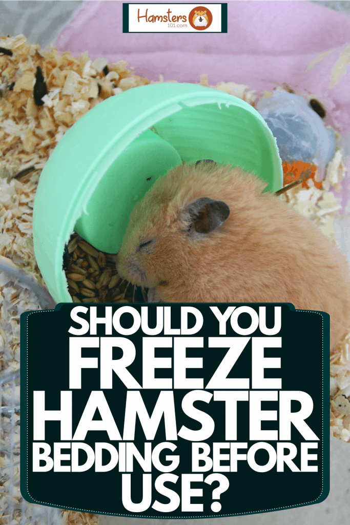 A cute hamster sleeping in his bowl, Should You Freeze Hamster Bedding Before Use?